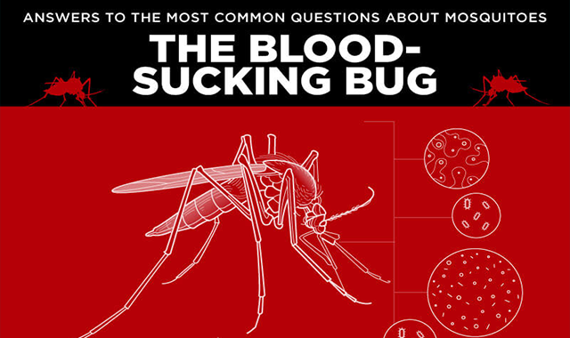 Answers to the Most Common Questions about Mosquitoes #infographic