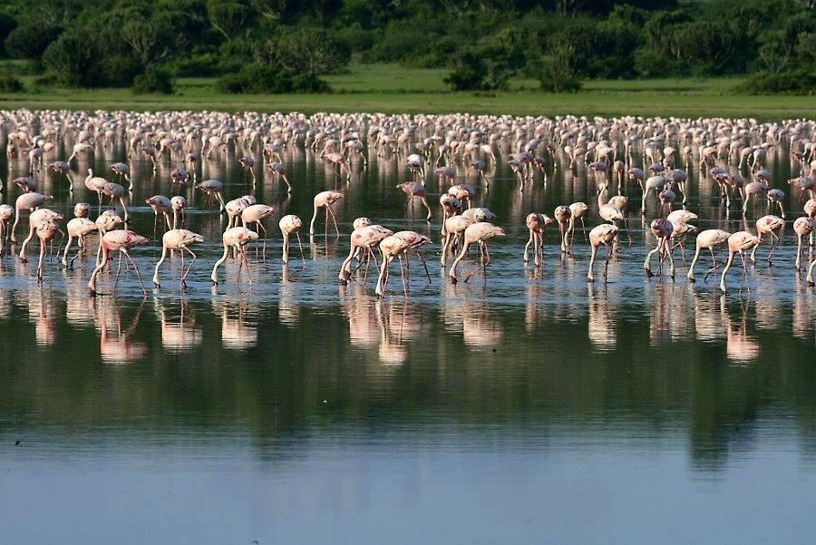 Does Uganda have Flamingos? - Uganda Safari News