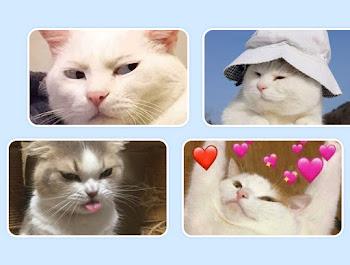 45 hình ảnh về mèo cute, mèo ngáo, mèo láo