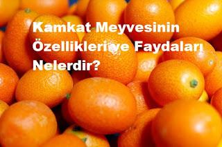 Kamkat Meyvesinin Özellikleri ve Faydaları Nelerdir?