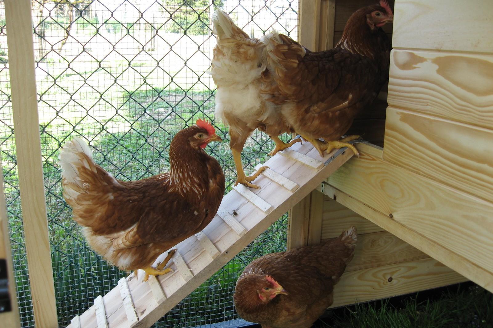 Piccolo pollaio fai da te for Come costruire un piccolo cottage