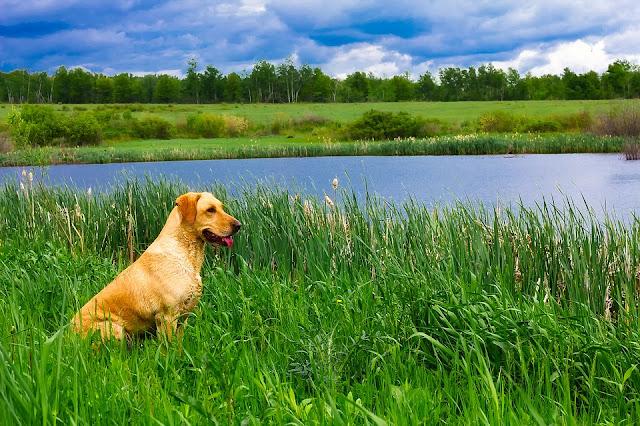 piante-velenose-per-cani