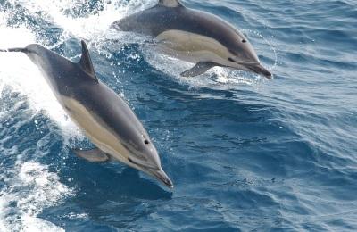 Delfines filmek összegzése