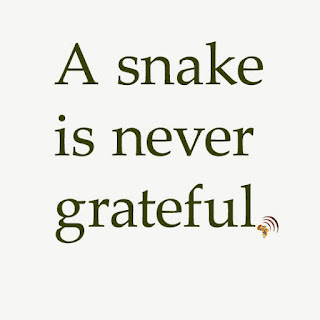 A snake is never grateful. African proverbs people love.