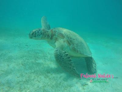 pulau perhentian, turtle, terengganu