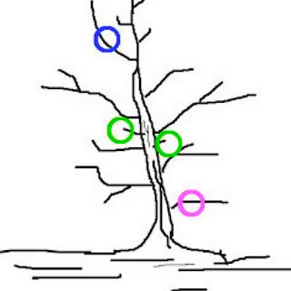 bagian-pohon-durian-yang-dipangkas.jpg