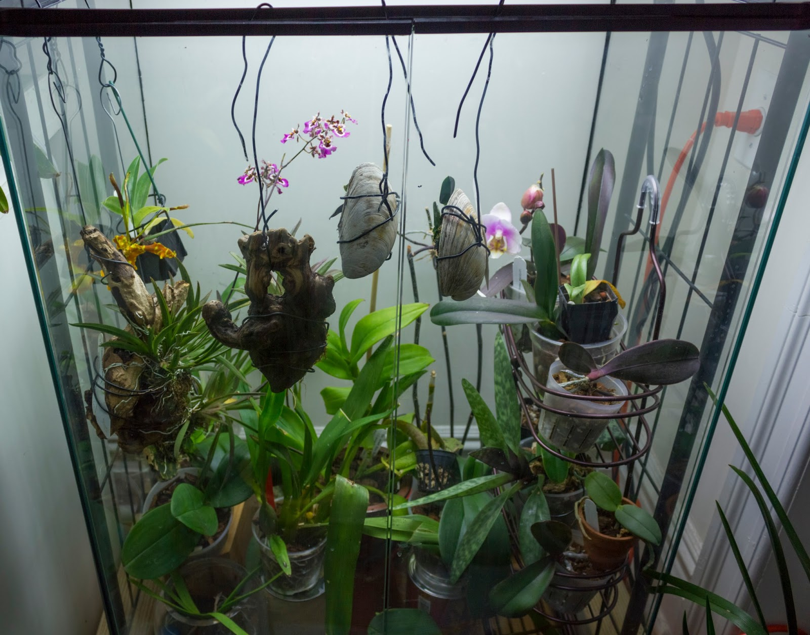 Maria S Orchids I M Back Home And My Orchids Are Doing Great