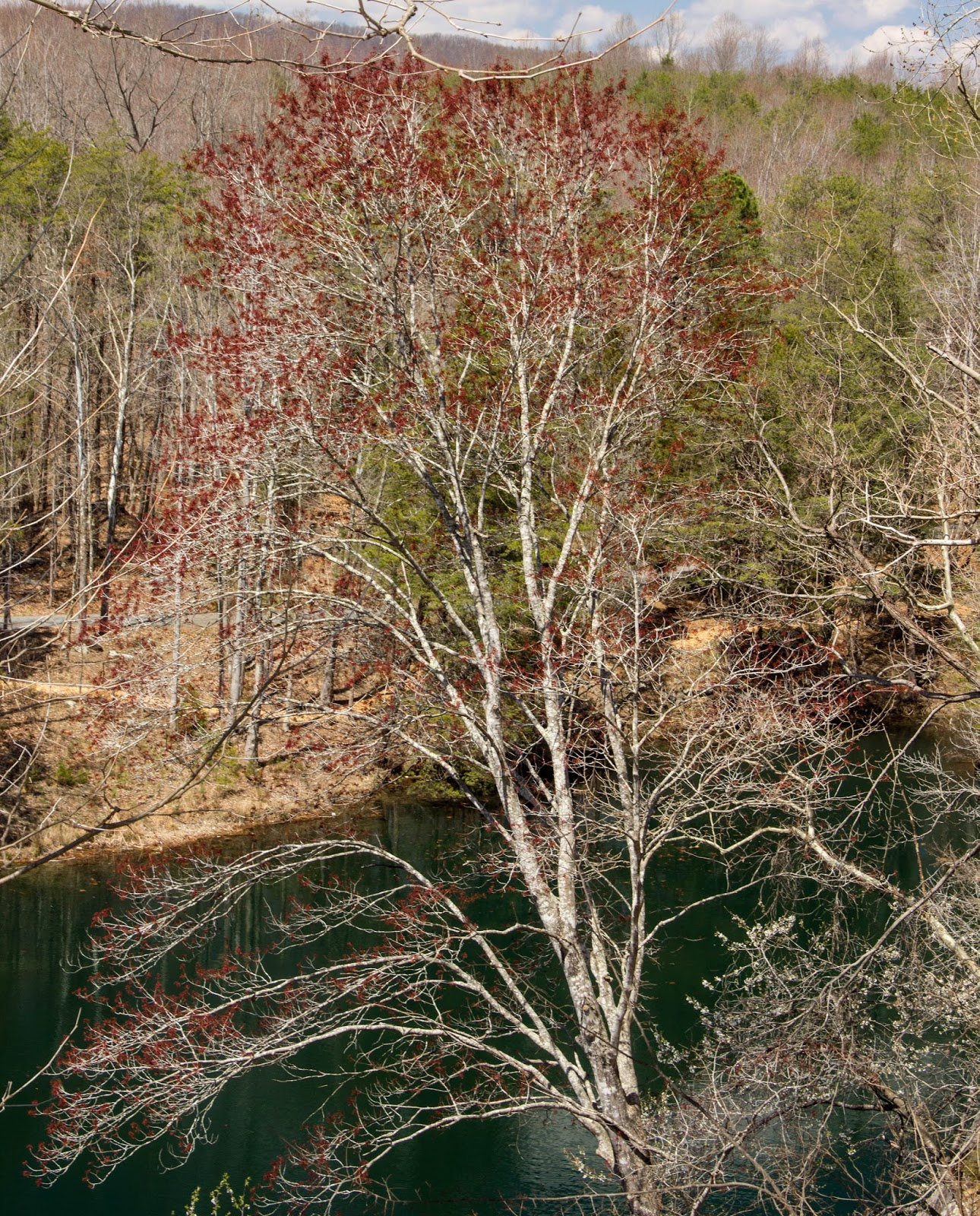 Of Leaf and Limb: Quarry Gardens at Schuyler