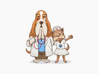 Perros: algunos tips básicos de salud y bienestar.