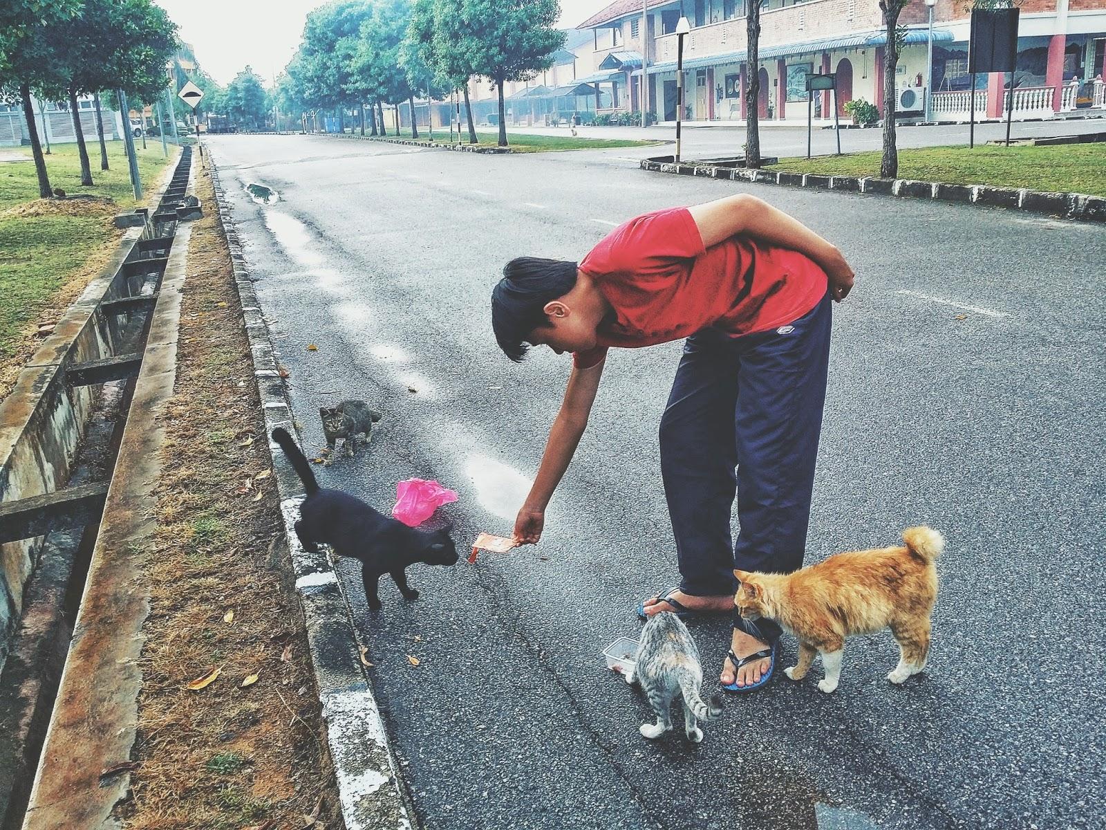 Koleksi Gambar Penuh Kasih Sayang Seorang Pencinta Kucing