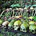 Туристов призывают воздержаться от посещения Деревни мёртвых на Бали