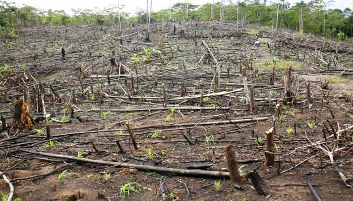 Ketika Sudah Tidak Ada Hutan Lagi