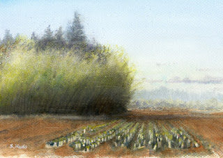 ダイコン畑 水彩スケッチ Japanese radish Field. Watercolor sketch.