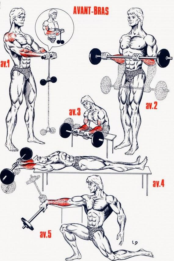 Calves and Forearm Exercices . Exercices pour Avant bras et Mollets . ~ Gym24