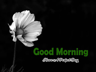New Good Morning 4k Full HD Images Download For Daily%2B34