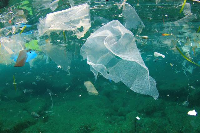 zatruta ryba plastikiem w morzu