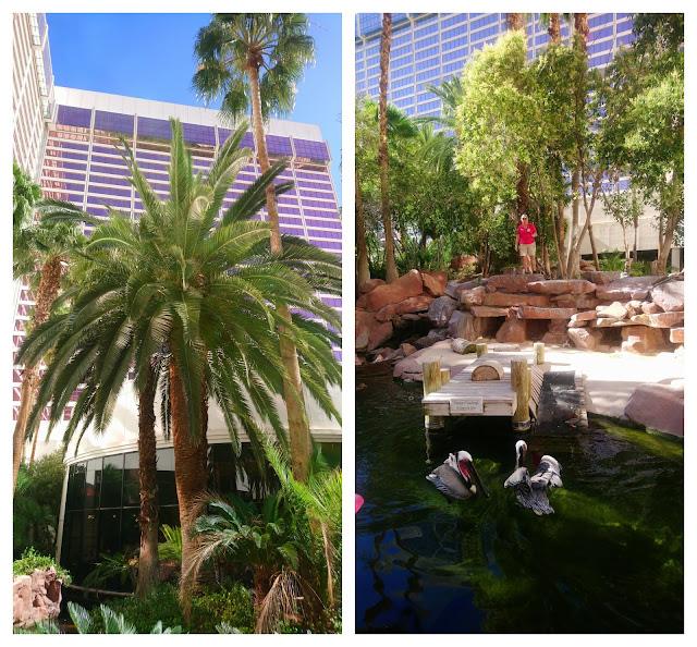 Flamingo Hotel Wildlife Habitat