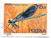 Selo Calopteryx splendens