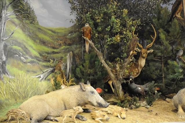Δύο βραβεία για το Μουσείο Φυσικής Ιστορίας Μετεώρων και Μουσείο μανιταριών