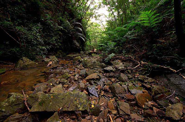 stream in jungle,rocks,ferns,trees