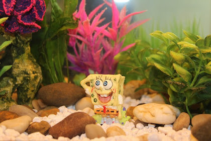 Fish Tank Maintenance Guide For Newbies