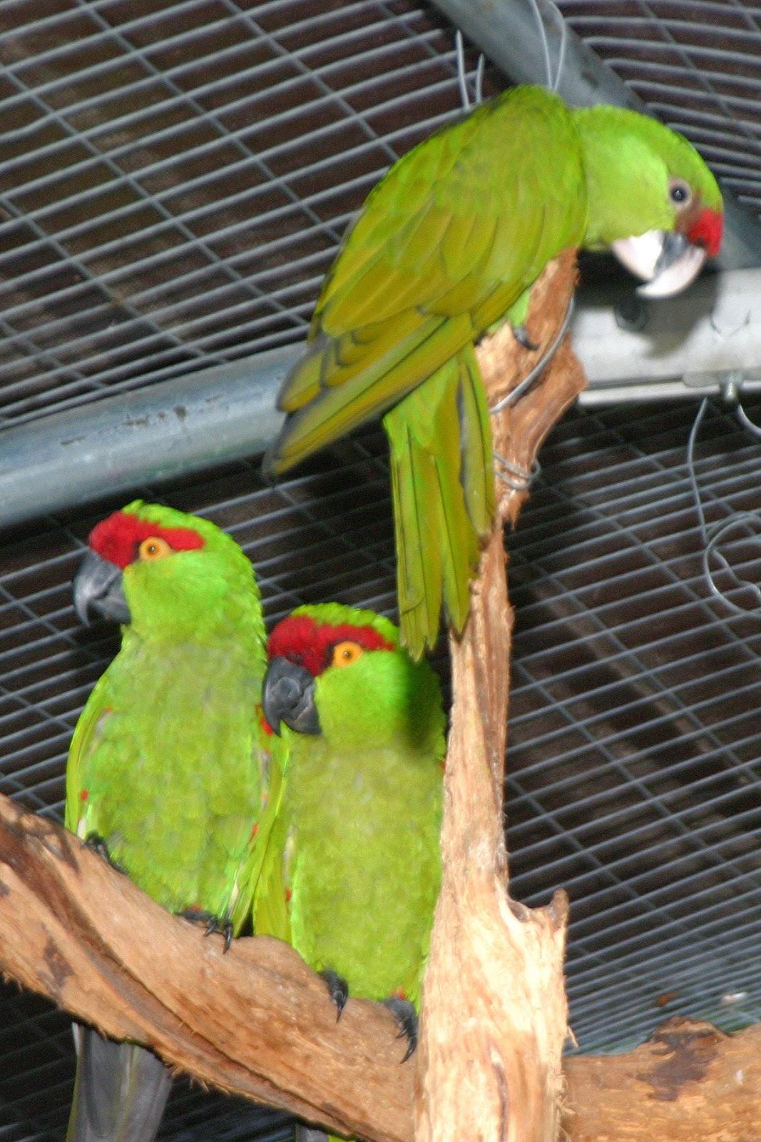 World Bird Sanctuary: May 2015