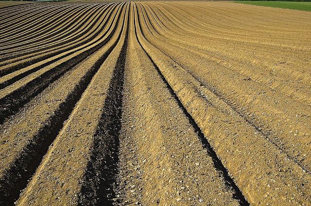 Cara Menggemburkan Tanah Liat Dan Berbagai Tanah Lainnya