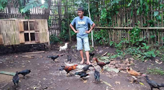 Setelah kita mengetahui bagaimana cara beternak ayam kampung yang terdiri dari pemilihan  Kabar Terbaru- PEMELIHARAAN PADA TERNAK AYAM KAMPUNG