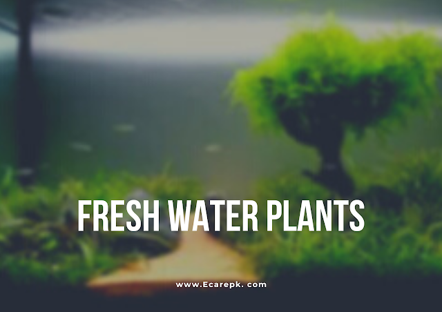 Interesting Facts About Plants Present in Water and Information About Still Fresh Water Plants
