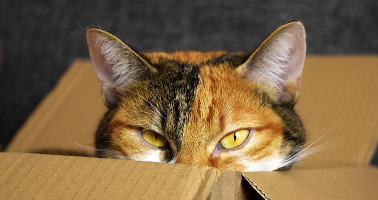 Gato pensando dentro de una caja