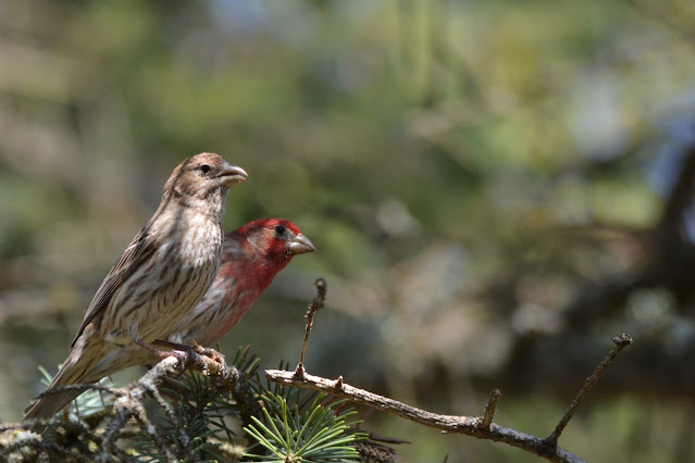 July is Wild About Wildlife Month: Featuring the Ottawa Valley Wild Bird Care Centre for #WildWednesday