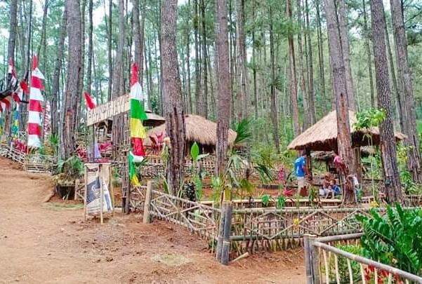 Destinasi Baru, Wisata Watu Jali Somagede Sempor Tawarkan Asrinya Hutan Pinus