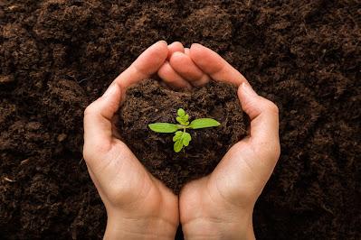 Importancia abono orgánico ecológico