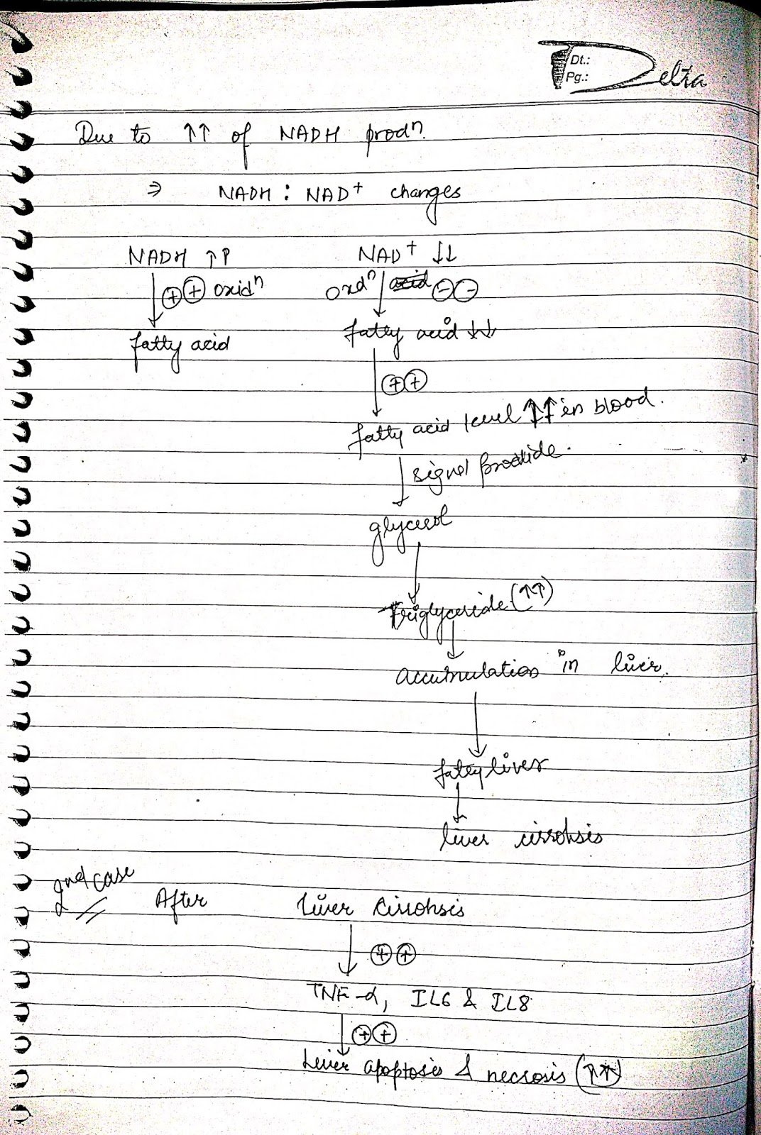pathophysiology - alcohola liver cirrhosis