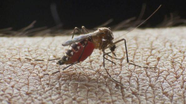 Mosquito-Borne Eastern Equine Encephalitis (EEE) Hits Late Season