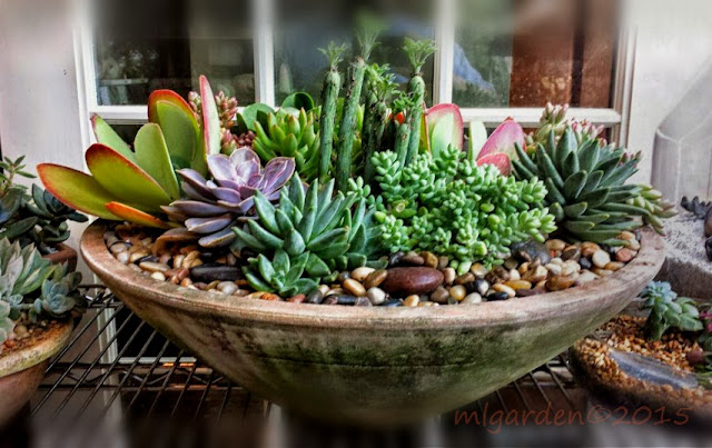 Garden Design Ideas: Sucessful Succulent Gardening - how to design a succulent garden