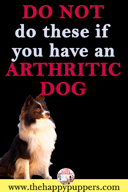 The do's and don'ts for guardians living with arthritic dogs