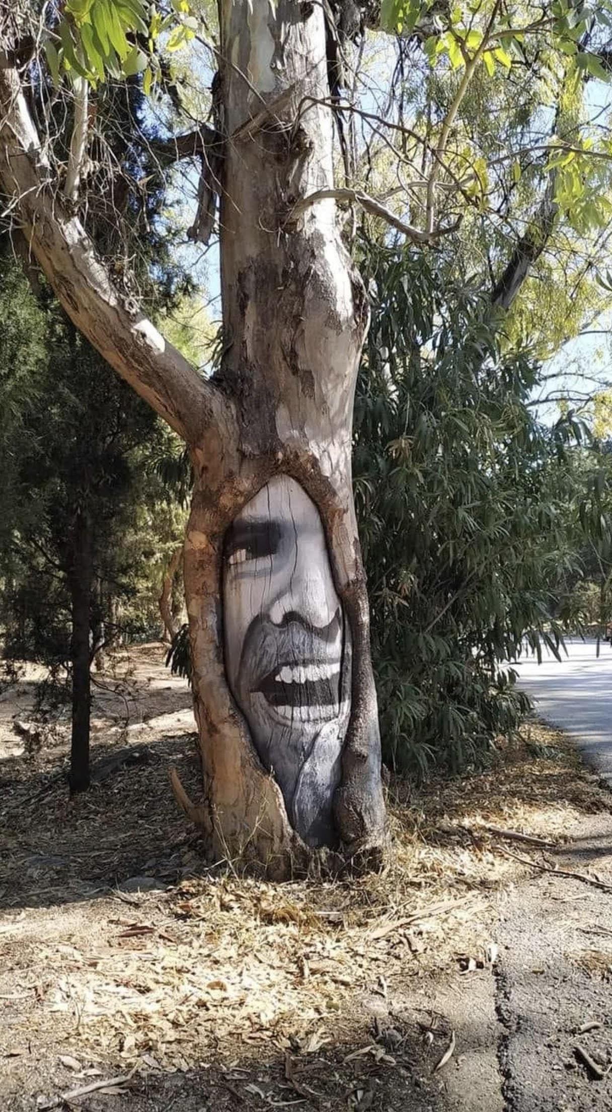 The Shining Tree : 故スタンリー・キューブリック監督のホラー映画史上の傑作「ザ・シャイニング」のジャック・ニコルソンの名シーンを再現した樹木のストリート・アート‼️