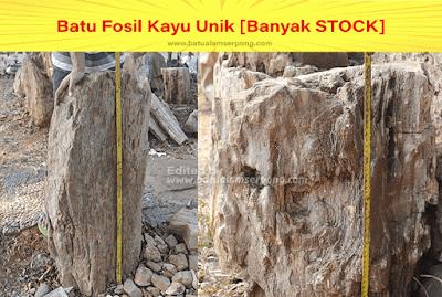 batu fosil kayu aquascape