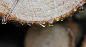 Pengertian oleoresin yang pernah diungkapkan oleh beberapa ahli memiliki perbedaan. Pengertian oleoresin ini diperoleh dari jurnal dan skripsi ilmiah