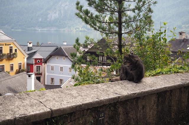 a cat exploring Hallstatt