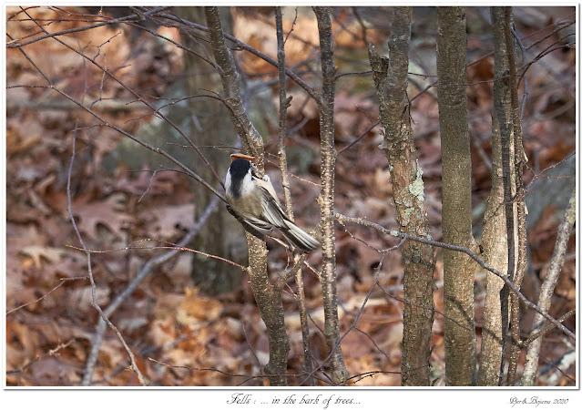 Fells: ... in the bark of trees...