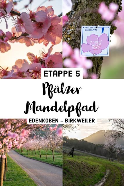 Pfälzer Mandelpfad | Etappe 05 Edenkoben – Birkweiler | Wandern Südliche Weinstraße | Mandelblüte Pfalz 22