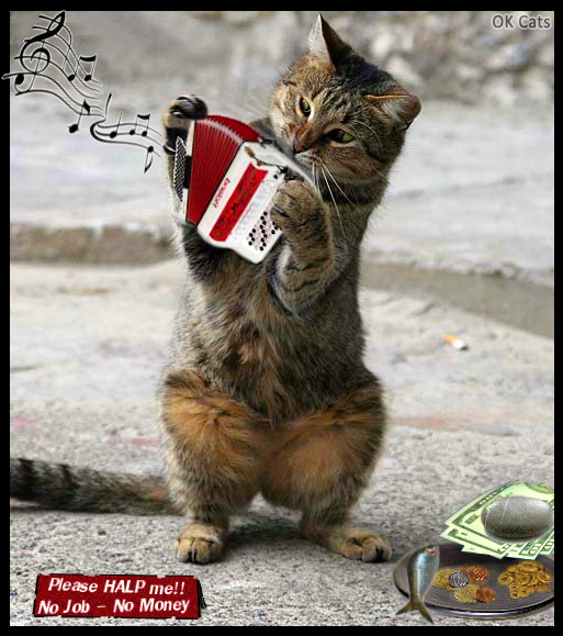 Photoshopped Cat picture • Poor homeless cat playing the accordion in the street to get some money, treat or fish [cat-gifs.com]