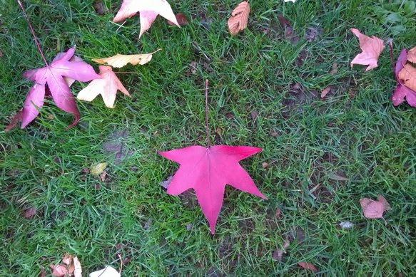 parlare dell'autunno ai bambini