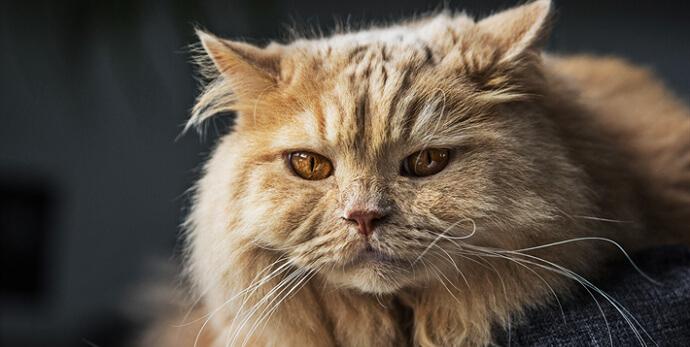 Arti mimpi kucing