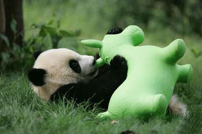Panda jugando en el pasto