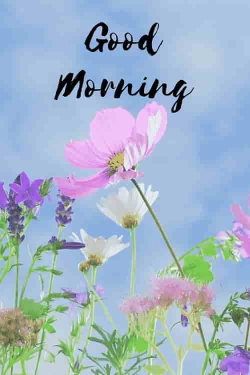 gud mrng with pink flower