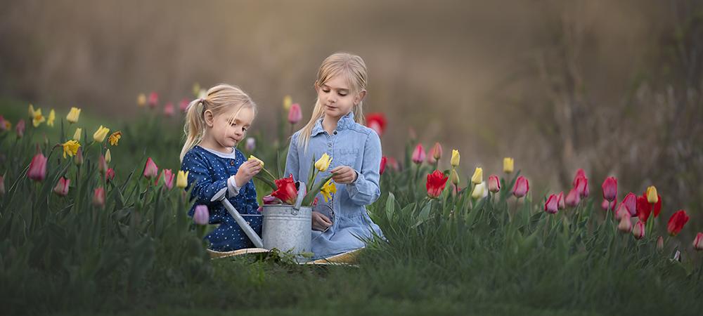 Tulip pictures DeKalb Sycamore Geneva IL Tulip mini sessions