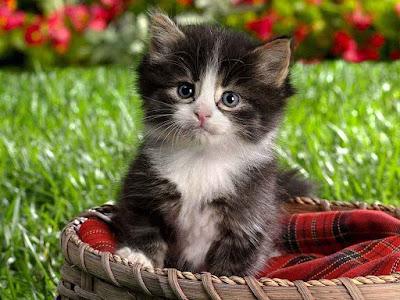 black-cat-kitten-with-innocent-eyes